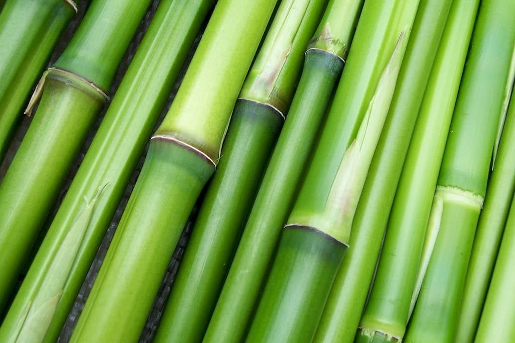 madera de bambu